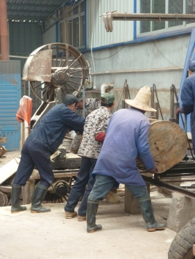 cutting the camphor