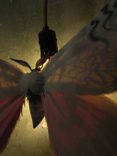 moth-on-bulb-lit-3
